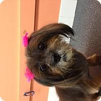 Adopt A Pet :: Buttons - Springfield, VA