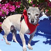 Adopt A Pet :: Hope - Gilbert, AZ