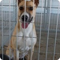 Adopt A Pet :: Mary - Ardmore, OK