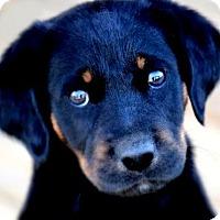 Adopt A Pet :: FINN(THE SURPRISE PUPPY!! - Wakefield, RI