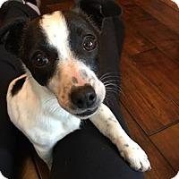 Adopt A Pet :: Josie - Warsaw, IN