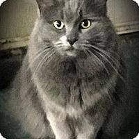 Adopt A Pet :: Moira - Fairborn, OH