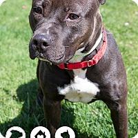 Adopt A Pet :: Cossa - Wauwatosa, WI