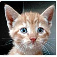 Adopt A Pet :: Murphy - Springdale, AR