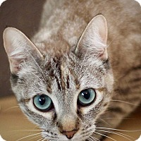 Adopt A Pet :: Dolce - San Antonio, TX