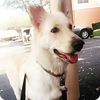 Adopt A Pet :: Zoey - Clearwater, FL