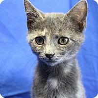 Adopt A Pet :: Zeva - Winston-Salem, NC