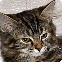 Adopt A Pet :: Katze--ADOPTION IN PROGRESS - Cookeville, TN