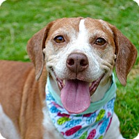 Adopt A Pet :: Nikki - Aubrey, TX
