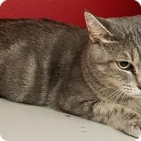 Adopt A Pet :: Anna - Kalamazoo, MI