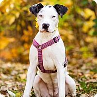 Adopt A Pet :: Zoe D3298 - Shakopee, MN