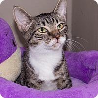 Adopt A Pet :: Alfie - Elmwood Park, NJ