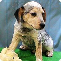 Adopt A Pet :: Keith - Maynardville, TN