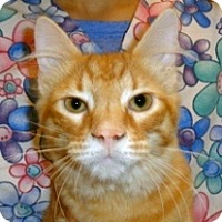 Adopt A Pet :: Chester - Wildomar, CA