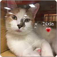 Adopt A Pet :: Dixie - Foothill Ranch, CA