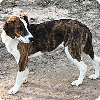 Adopt A Pet :: Rosemary - Joliet, IL