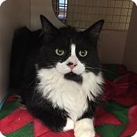 Adopt A Pet :: Cooper - Islip, NY