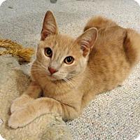 Adopt A Pet :: Barley - Troy, MI