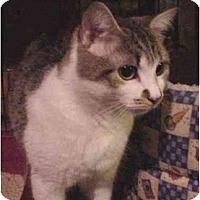 Adopt A Pet :: Dixie - Chesapeake, VA