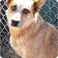 Adopt A Pet :: Kai - Santa Barbara, CA