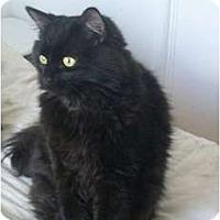 Adopt A Pet :: Smudge - Portland, ME