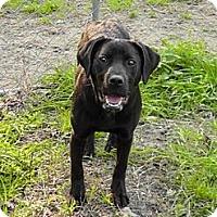 Adopt A Pet :: Sam Wilder - Southampton, PA