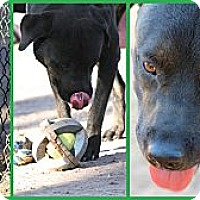 Adopt A Pet :: Buddy Boy - Scottsdale, AZ