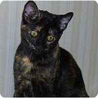 Adopt A Pet :: Kia - Modesto, CA