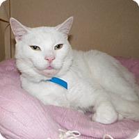 Adopt A Pet :: Blitz - Dover, OH