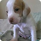 Adopt A Pet :: Pandy2