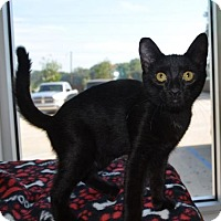 Adopt A Pet :: Pierre - New Iberia, LA