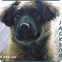 Adopt A Pet :: Jackson- Adoption Pending - Marlborough, MA