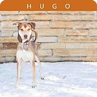 Adopt A Pet :: HUGO - Toronto, ON