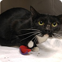 Adopt A Pet :: T-7 Fancy - Triadelphia, WV