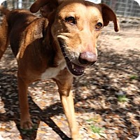 Adopt A Pet :: Taylor - San Antonio, TX