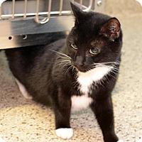 Adopt A Pet :: Anggel - Scituate, MA