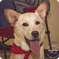 Adopt A Pet :: Sparky - Cincinnati, OH