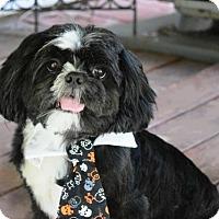 Adopt A Pet :: Oreo - Springfield, VA