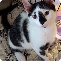 Adopt A Pet :: Cali #7 - Lunenburg, MA