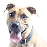 Adopt A Pet :: Griswald - Bradenton, FL