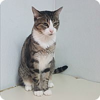 Adopt A Pet :: Carol - yuba city, CA