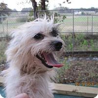 Adopt A Pet :: Theo - Blanchard, OK