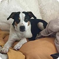 Adopt A Pet :: Finley - Hopkinton, MA