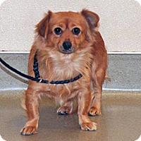Adopt A Pet :: Lolita - Wildomar, CA