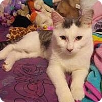 Adopt A Pet :: Presley - Worcester, MA