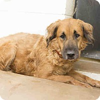 Adopt A Pet :: ON EUTHANASIA LIST! Only $25!! - Litchfield Park, AZ