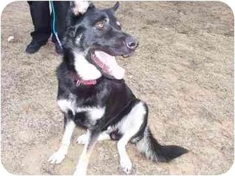 Dog Adoption Middletown Ri