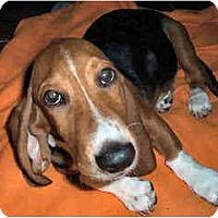 Adopt A Pet :: Skeeter - Phoenix, AZ