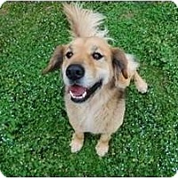 Adopt A Pet :: Joey - Portland, ME