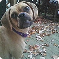 Adopt A Pet :: Abby ~ Adoption Pending - Youngstown, OH